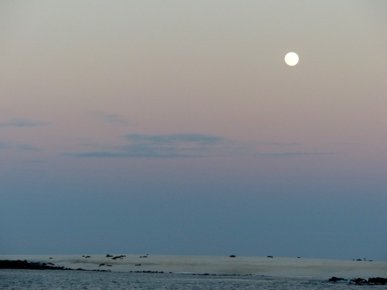 Sea lions with moon