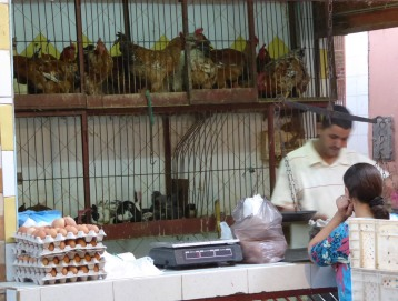 Chicken sales