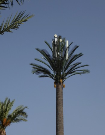 Palm cell tower